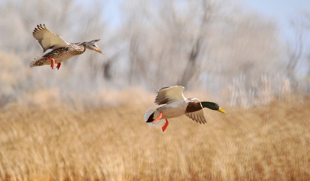 What Types Of Shouting Pellets Are Allowed For Waterfowl Hunting In The US?