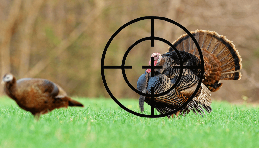 Which Shotgun Choke is Best For Hunting A Large, Slow Bird, Such As A Turkey