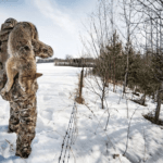 Best Time to Hunt Coyotes | When to Hunt Coyotes