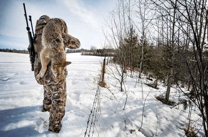 Best Time to Hunt Coyotes
