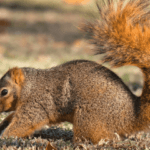 When are Squirrels Most Active?