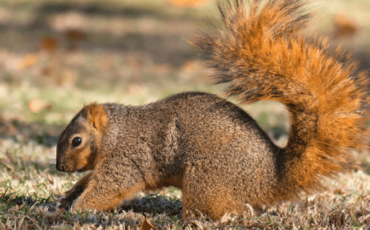 When are Squirrels Most Active