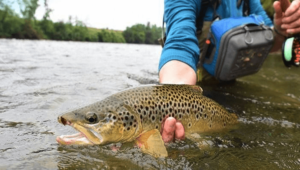 How to Catch Trout in a Lake from Shore