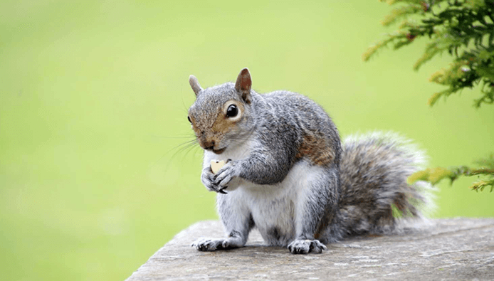 How to Attract Squirrels