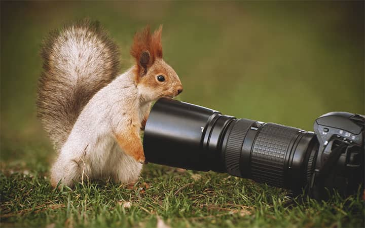 How To Get Rid of Squirrels Naturally