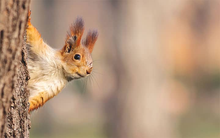 Squirrel - An Intelligent Species with Sharp Memory
